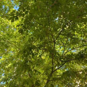 Ciudadanos (Cs) Rivas propone plantar un árbol por cada bebé nacido que sea vecino de Rivas